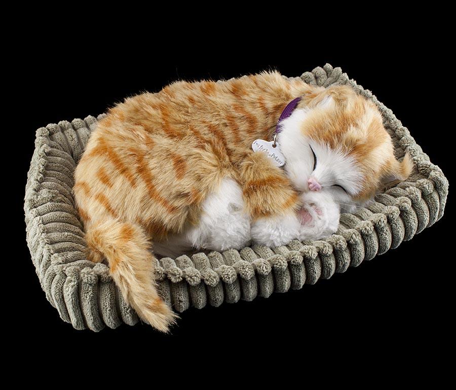 Perfect petzzz atmende schlafende katze orange tabby soft